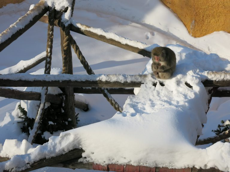Monkeys in the snow at Moscow zoo